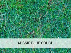 Aussie Blue Couch Brisbane Soils Amp Landscaping Supplies