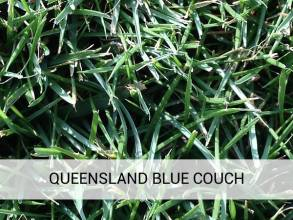 Queensland Blue Couch Brisbane Turf Supplies Brisbane