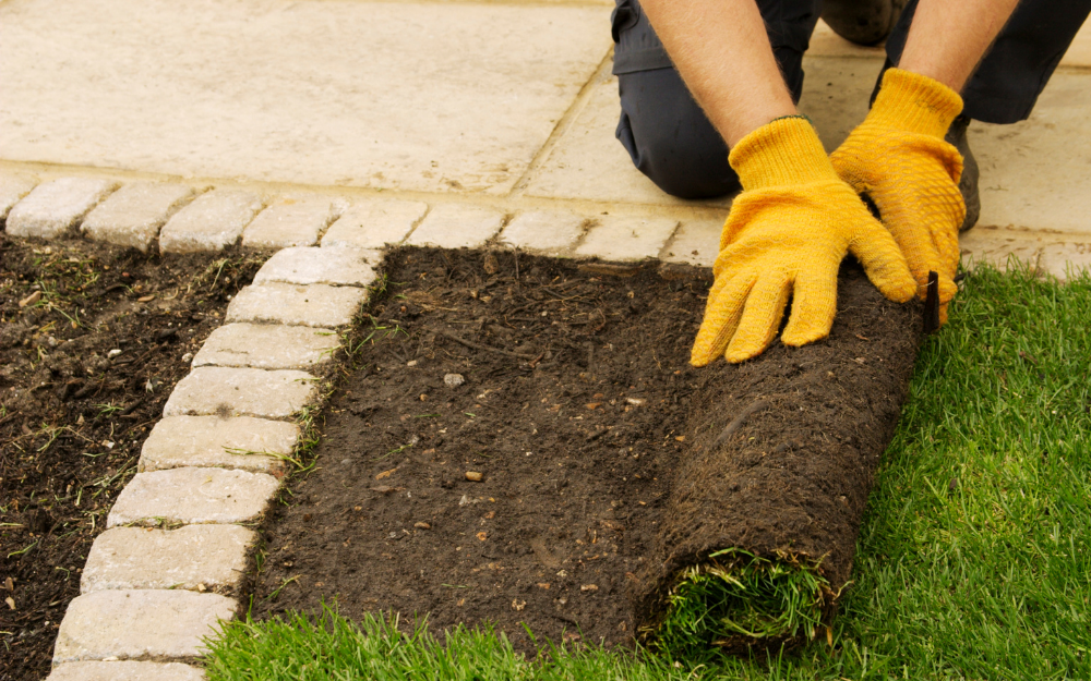 Brisbane Turf - 5 Reasons To Include New Turf At Your Home